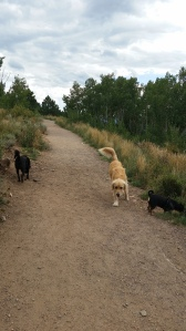 Evergreen Off-Leash Dog Park