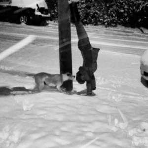 Snowy Colorado Handstands