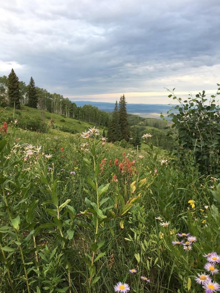 Wildflowers in Steamboat Colorado